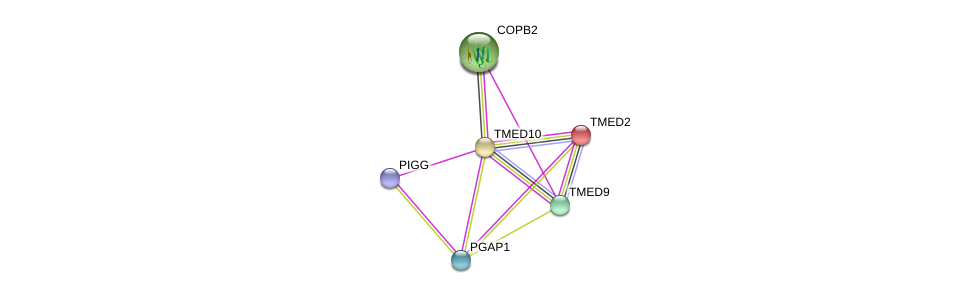 http://string-db.org/version_10/api/image/networkList?limit=0&targetmode=proteins&caller_identity=gene_cards&network_flavor=evidence&identifiers=9606.ENSP00000303145%0d%0a9606.ENSP00000262225%0d%0a9606.ENSP00000330945%0d%0a9606.ENSP00000346809%0d%0a9606.ENSP00000415203%0d%0a9606.ENSP00000329419%0d%0a