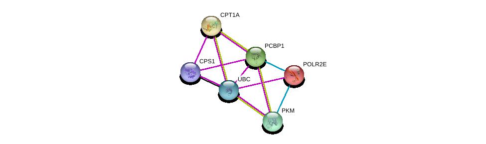 http://string-db.org/version_10/api/image/networkList?limit=0&targetmode=proteins&caller_identity=gene_cards&network_flavor=evidence&identifiers=9606.ENSP00000305556%0d%0a9606.ENSP00000344818%0d%0a9606.ENSP00000320171%0d%0a9606.ENSP00000402608%0d%0a9606.ENSP00000265641%0d%0a9606.ENSP00000215587%0d%0a