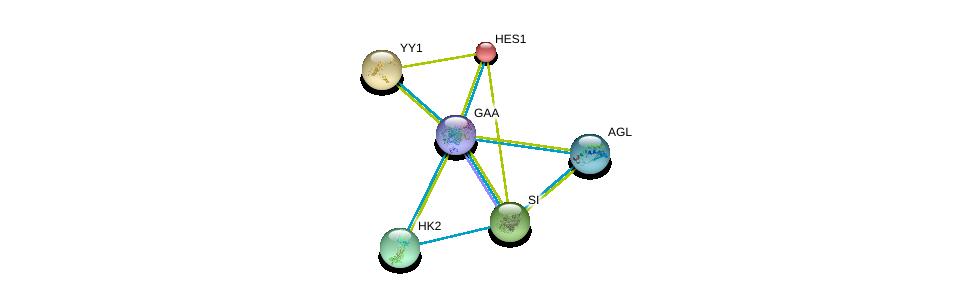 http://string-db.org/version_10/api/image/networkList?limit=0&targetmode=proteins&caller_identity=gene_cards&network_flavor=evidence&identifiers=9606.ENSP00000305692%0d%0a9606.ENSP00000294724%0d%0a9606.ENSP00000232424%0d%0a9606.ENSP00000262238%0d%0a9606.ENSP00000264382%0d%0a9606.ENSP00000290573%0d%0a