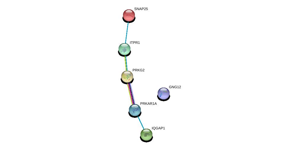 http://string-db.org/version_10/api/image/networkList?limit=0&targetmode=proteins&caller_identity=gene_cards&network_flavor=evidence&identifiers=9606.ENSP00000306253%0d%0a9606.ENSP00000360021%0d%0a9606.ENSP00000268182%0d%0a9606.ENSP00000264399%0d%0a9606.ENSP00000351410%0d%0a9606.ENSP00000254976%0d%0a