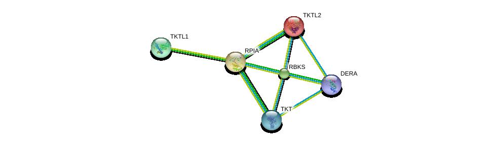 http://string-db.org/version_10/api/image/networkList?limit=0&targetmode=proteins&caller_identity=gene_cards&network_flavor=evidence&identifiers=9606.ENSP00000306817%0d%0a9606.ENSP00000358931%0d%0a9606.ENSP00000405455%0d%0a9606.ENSP00000280605%0d%0a9606.ENSP00000416583%0d%0a9606.ENSP00000283646%0d%0a