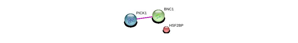 http://string-db.org/version_10/api/image/networkList?limit=0&targetmode=proteins&caller_identity=gene_cards&network_flavor=evidence&identifiers=9606.ENSP00000307041%0d%0a9606.ENSP00000349465%0d%0a9606.ENSP00000291560%0d%0a