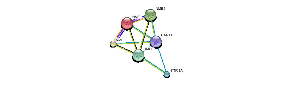 http://string-db.org/version_10/api/image/networkList?limit=0&targetmode=proteins&caller_identity=gene_cards&network_flavor=evidence&identifiers=9606.ENSP00000307674%0d%0a9606.ENSP00000013034%0d%0a9606.ENSP00000219302%0d%0a9606.ENSP00000219479%0d%0a9606.ENSP00000232607%0d%0a9606.ENSP00000235628%0d%0a