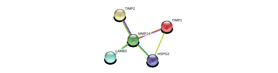 http://string-db.org/version_10/api/image/networkList?limit=0&targetmode=proteins&caller_identity=gene_cards&network_flavor=evidence&identifiers=9606.ENSP00000308208%0d%0a9606.ENSP00000262768%0d%0a9606.ENSP00000218388%0d%0a9606.ENSP00000348384%0d%0a9606.ENSP00000348384%0d%0a9606.ENSP00000363827%0d%0a