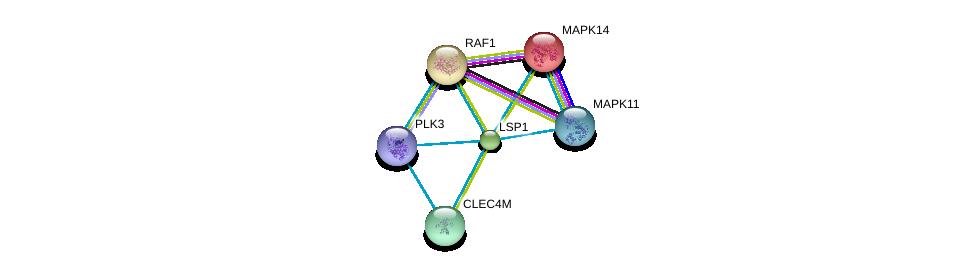 http://string-db.org/version_10/api/image/networkList?limit=0&targetmode=proteins&caller_identity=gene_cards&network_flavor=evidence&identifiers=9606.ENSP00000308383%0d%0a9606.ENSP00000333685%0d%0a9606.ENSP00000229794%0d%0a9606.ENSP00000316228%0d%0a9606.ENSP00000251849%0d%0a9606.ENSP00000361275%0d%0a