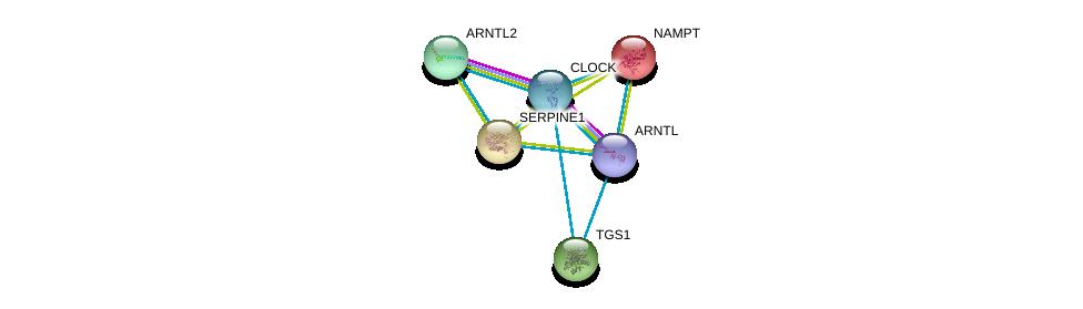 http://string-db.org/version_10/api/image/networkList?limit=0&targetmode=proteins&caller_identity=gene_cards&network_flavor=evidence&identifiers=9606.ENSP00000308741%0d%0a9606.ENSP00000374357%0d%0a9606.ENSP00000266503%0d%0a9606.ENSP00000222553%0d%0a9606.ENSP00000223095%0d%0a9606.ENSP00000260129%0d%0a