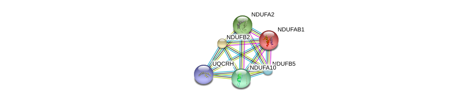 http://string-db.org/version_10/api/image/networkList?limit=0&targetmode=proteins&caller_identity=gene_cards&network_flavor=evidence&identifiers=9606.ENSP00000309565%0d%0a9606.ENSP00000007516%0d%0a9606.ENSP00000247866%0d%0a9606.ENSP00000252102%0d%0a9606.ENSP00000252711%0d%0a9606.ENSP00000259037%0d%0a