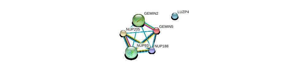 http://string-db.org/version_10/api/image/networkList?limit=0&targetmode=proteins&caller_identity=gene_cards&network_flavor=evidence&identifiers=9606.ENSP00000310668%0d%0a9606.ENSP00000285968%0d%0a9606.ENSP00000361658%0d%0a9606.ENSP00000360988%0d%0a9606.ENSP00000308533%0d%0a9606.ENSP00000285873%0d%0a