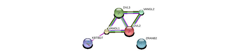 http://string-db.org/version_10/api/image/networkList?limit=0&targetmode=proteins&caller_identity=gene_cards&network_flavor=evidence&identifiers=9606.ENSP00000310800%0d%0a9606.ENSP00000357040%0d%0a9606.ENSP00000359958%0d%0a9606.ENSP00000368797%0d%0a9606.ENSP00000005340%0d%0a9606.ENSP00000316054%0d%0a