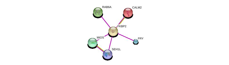 http://string-db.org/version_10/api/image/networkList?limit=0&targetmode=proteins&caller_identity=gene_cards&network_flavor=evidence&identifiers=9606.ENSP00000310935%0d%0a9606.ENSP00000272298%0d%0a9606.ENSP00000339881%0d%0a9606.ENSP00000382779%0d%0a9606.ENSP00000311449%0d%0a9606.ENSP00000369600%0d%0a
