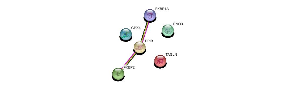 http://string-db.org/version_10/api/image/networkList?limit=0&targetmode=proteins&caller_identity=gene_cards&network_flavor=evidence&identifiers=9606.ENSP00000310935%0d%0a9606.ENSP00000371138%0d%0a9606.ENSP00000346103%0d%0a9606.ENSP00000278968%0d%0a9606.ENSP00000324105%0d%0a9606.ENSP00000300026%0d%0a