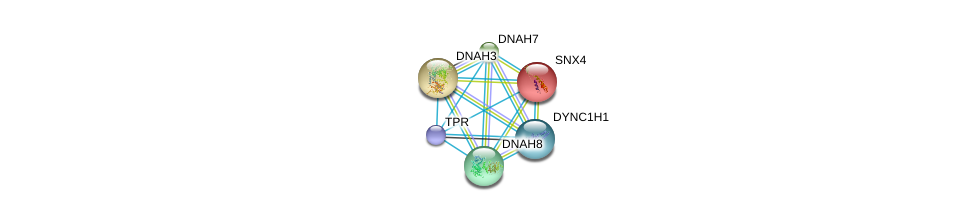 http://string-db.org/version_10/api/image/networkList?limit=0&targetmode=proteins&caller_identity=gene_cards&network_flavor=evidence&identifiers=9606.ENSP00000311273%0d%0a9606.ENSP00000251775%0d%0a9606.ENSP00000261383%0d%0a9606.ENSP00000333363%0d%0a9606.ENSP00000348965%0d%0a9606.ENSP00000356448%0d%0a