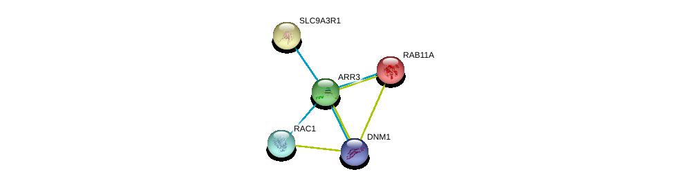 http://string-db.org/version_10/api/image/networkList?limit=0&targetmode=proteins&caller_identity=gene_cards&network_flavor=evidence&identifiers=9606.ENSP00000311538%0d%0a9606.ENSP00000261890%0d%0a9606.ENSP00000362014%0d%0a9606.ENSP00000348461%0d%0a9606.ENSP00000262613%0d%0a9606.ENSP00000262613%0d%0a