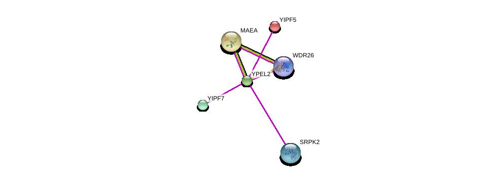 http://string-db.org/version_10/api/image/networkList?limit=0&targetmode=proteins&caller_identity=gene_cards&network_flavor=evidence&identifiers=9606.ENSP00000312272%0d%0a9606.ENSP00000274496%0d%0a9606.ENSP00000408108%0d%0a9606.ENSP00000302830%0d%0a9606.ENSP00000332772%0d%0a9606.ENSP00000377262%0d%0a