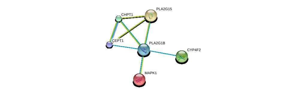 http://string-db.org/version_10/api/image/networkList?limit=0&targetmode=proteins&caller_identity=gene_cards&network_flavor=evidence&identifiers=9606.ENSP00000312286%0d%0a9606.ENSP00000349696%0d%0a9606.ENSP00000215832%0d%0a9606.ENSP00000219345%0d%0a9606.ENSP00000221700%0d%0a9606.ENSP00000229266%0d%0a