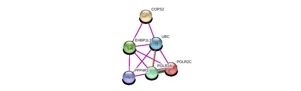 http://string-db.org/version_10/api/image/networkList?limit=0&targetmode=proteins&caller_identity=gene_cards&network_flavor=evidence&identifiers=9606.ENSP00000312671%0d%0a9606.ENSP00000344818%0d%0a9606.ENSP00000299259%0d%0a9606.ENSP00000219252%0d%0a9606.ENSP00000314949%0d%0a9606.ENSP00000383402%0d%0a