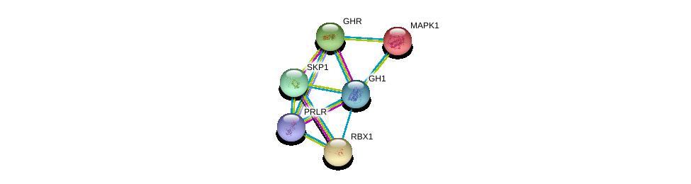 http://string-db.org/version_10/api/image/networkList?limit=0&targetmode=proteins&caller_identity=gene_cards&network_flavor=evidence&identifiers=9606.ENSP00000312673%0d%0a9606.ENSP00000230882%0d%0a9606.ENSP00000371432%0d%0a9606.ENSP00000215832%0d%0a9606.ENSP00000216225%0d%0a9606.ENSP00000231487%0d%0a