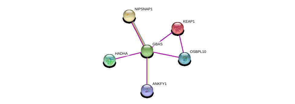http://string-db.org/version_10/api/image/networkList?limit=0&targetmode=proteins&caller_identity=gene_cards&network_flavor=evidence&identifiers=9606.ENSP00000313050%0d%0a9606.ENSP00000379804%0d%0a9606.ENSP00000171111%0d%0a9606.ENSP00000216121%0d%0a9606.ENSP00000370023%0d%0a9606.ENSP00000459775%0d%0a