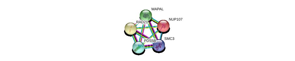 http://string-db.org/version_10/api/image/networkList?limit=0&targetmode=proteins&caller_identity=gene_cards&network_flavor=evidence&identifiers=9606.ENSP00000313851%0d%0a9606.ENSP00000298767%0d%0a9606.ENSP00000354720%0d%0a9606.ENSP00000297338%0d%0a9606.ENSP00000297338%0d%0a9606.ENSP00000229179%0d%0a