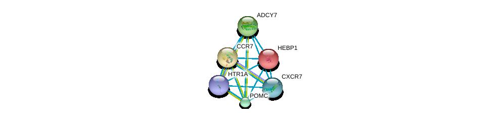 http://string-db.org/version_10/api/image/networkList?limit=0&targetmode=proteins&caller_identity=gene_cards&network_flavor=evidence&identifiers=9606.ENSP00000316244%0d%0a9606.ENSP00000264708%0d%0a9606.ENSP00000254235%0d%0a9606.ENSP00000246657%0d%0a9606.ENSP00000014930%0d%0a9606.ENSP00000272928%0d%0a
