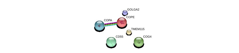 http://string-db.org/version_10/api/image/networkList?limit=0&targetmode=proteins&caller_identity=gene_cards&network_flavor=evidence&identifiers=9606.ENSP00000316333%0d%0a9606.ENSP00000416097%0d%0a9606.ENSP00000266025%0d%0a9606.ENSP00000262812%0d%0a9606.ENSP00000315775%0d%0a9606.ENSP00000357048%0d%0a