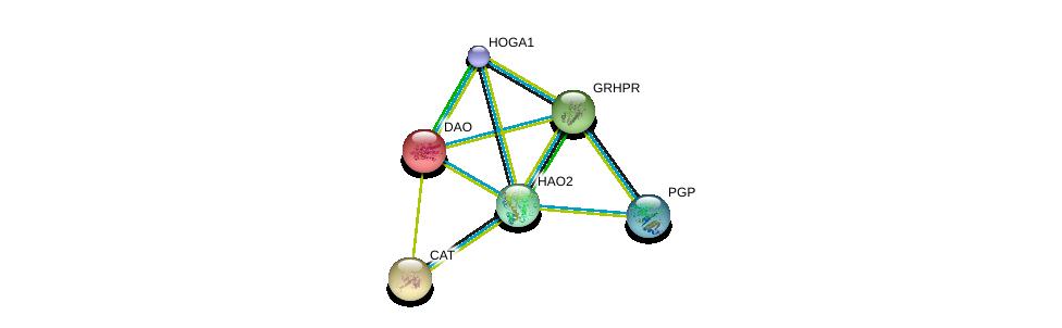 http://string-db.org/version_10/api/image/networkList?limit=0&targetmode=proteins&caller_identity=gene_cards&network_flavor=evidence&identifiers=9606.ENSP00000316339%0d%0a9606.ENSP00000330918%0d%0a9606.ENSP00000241052%0d%0a9606.ENSP00000313432%0d%0a9606.ENSP00000359680%0d%0a9606.ENSP00000228476%0d%0a