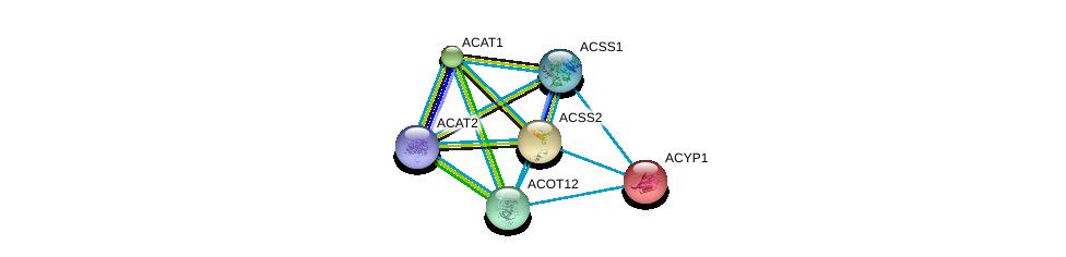 http://string-db.org/version_10/api/image/networkList?limit=0&targetmode=proteins&caller_identity=gene_cards&network_flavor=evidence&identifiers=9606.ENSP00000316924%0d%0a9606.ENSP00000238618%0d%0a9606.ENSP00000253382%0d%0a9606.ENSP00000265838%0d%0a9606.ENSP00000303246%0d%0a9606.ENSP00000356015%0d%0a