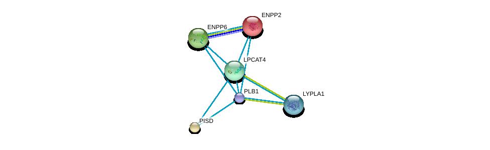 http://string-db.org/version_10/api/image/networkList?limit=0&targetmode=proteins&caller_identity=gene_cards&network_flavor=evidence&identifiers=9606.ENSP00000317300%0d%0a9606.ENSP00000259486%0d%0a9606.ENSP00000266095%0d%0a9606.ENSP00000296741%0d%0a9606.ENSP00000320043%0d%0a9606.ENSP00000330442%0d%0a