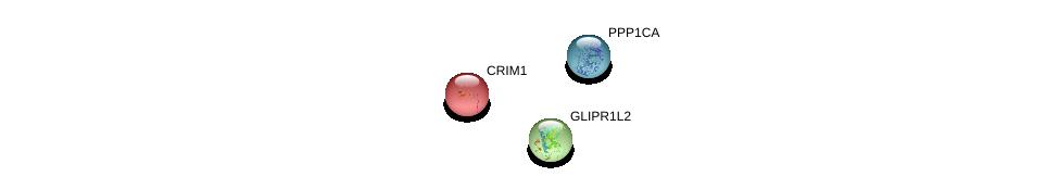 http://string-db.org/version_10/api/image/networkList?limit=0&targetmode=proteins&caller_identity=gene_cards&network_flavor=evidence&identifiers=9606.ENSP00000317385%0d%0a9606.ENSP00000326031%0d%0a9606.ENSP00000280527%0d%0a