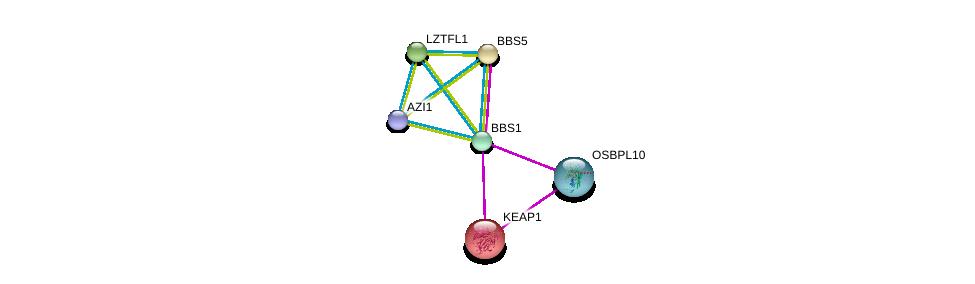 http://string-db.org/version_10/api/image/networkList?limit=0&targetmode=proteins&caller_identity=gene_cards&network_flavor=evidence&identifiers=9606.ENSP00000317469%0d%0a9606.ENSP00000379804%0d%0a9606.ENSP00000171111%0d%0a9606.ENSP00000296135%0d%0a9606.ENSP00000393583%0d%0a9606.ENSP00000295240%0d%0a
