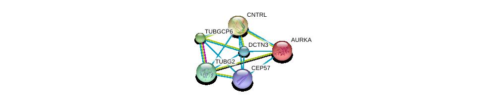 http://string-db.org/version_10/api/image/networkList?limit=0&targetmode=proteins&caller_identity=gene_cards&network_flavor=evidence&identifiers=9606.ENSP00000317902%0d%0a9606.ENSP00000216911%0d%0a9606.ENSP00000238341%0d%0a9606.ENSP00000248846%0d%0a9606.ENSP00000251412%0d%0a9606.ENSP00000259632%0d%0a