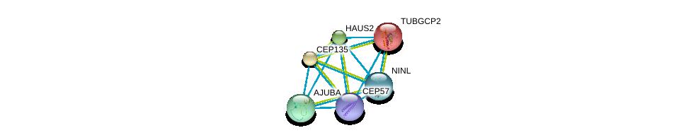 http://string-db.org/version_10/api/image/networkList?limit=0&targetmode=proteins&caller_identity=gene_cards&network_flavor=evidence&identifiers=9606.ENSP00000317902%0d%0a9606.ENSP00000252936%0d%0a9606.ENSP00000278886%0d%0a9606.ENSP00000260372%0d%0a9606.ENSP00000262713%0d%0a9606.ENSP00000257287%0d%0a