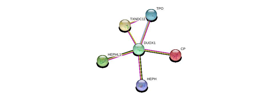 http://string-db.org/version_10/api/image/networkList?limit=0&targetmode=proteins&caller_identity=gene_cards&network_flavor=evidence&identifiers=9606.ENSP00000317997%0d%0a9606.ENSP00000318820%0d%0a9606.ENSP00000283033%0d%0a9606.ENSP00000430620%0d%0a9606.ENSP00000313699%0d%0a9606.ENSP00000264613%0d%0a