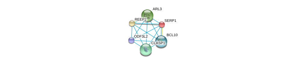http://string-db.org/version_10/api/image/networkList?limit=0&targetmode=proteins&caller_identity=gene_cards&network_flavor=evidence&identifiers=9606.ENSP00000318029%0d%0a9606.ENSP00000239944%0d%0a9606.ENSP00000254901%0d%0a9606.ENSP00000260746%0d%0a9606.ENSP00000263710%0d%0a9606.ENSP00000271015%0d%0a