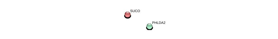 http://string-db.org/version_10/api/image/networkList?limit=0&targetmode=proteins&caller_identity=gene_cards&network_flavor=evidence&identifiers=9606.ENSP00000319231%0d%0a9606.ENSP00000263688%0d%0a