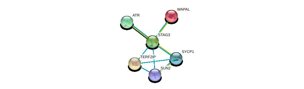 http://string-db.org/version_10/api/image/networkList?limit=0&targetmode=proteins&caller_identity=gene_cards&network_flavor=evidence&identifiers=9606.ENSP00000319318%0d%0a9606.ENSP00000300086%0d%0a9606.ENSP00000385616%0d%0a9606.ENSP00000298767%0d%0a9606.ENSP00000343741%0d%0a9606.ENSP00000358531%0d%0a