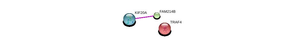 http://string-db.org/version_10/api/image/networkList?limit=0&targetmode=proteins&caller_identity=gene_cards&network_flavor=evidence&identifiers=9606.ENSP00000319897%0d%0a9606.ENSP00000378356%0d%0a9606.ENSP00000262395%0d%0a