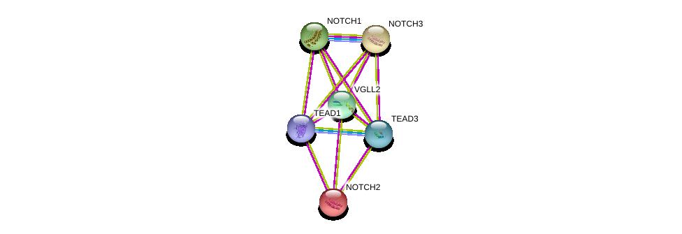 http://string-db.org/version_10/api/image/networkList?limit=0&targetmode=proteins&caller_identity=gene_cards&network_flavor=evidence&identifiers=9606.ENSP00000320957%0d%0a9606.ENSP00000345772%0d%0a9606.ENSP00000354588%0d%0a9606.ENSP00000263388%0d%0a9606.ENSP00000277541%0d%0a9606.ENSP00000256646%0d%0a