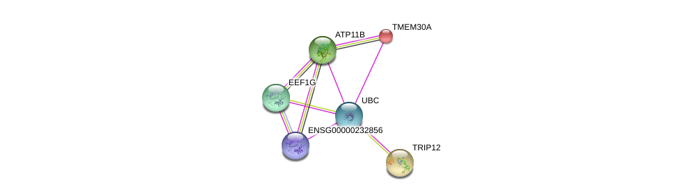 http://string-db.org/version_10/api/image/networkList?limit=0&targetmode=proteins&caller_identity=gene_cards&network_flavor=evidence&identifiers=9606.ENSP00000321195%0d%0a9606.ENSP00000230461%0d%0a9606.ENSP00000344818%0d%0a9606.ENSP00000331901%0d%0a9606.ENSP00000403936%0d%0a9606.ENSP00000283943%0d%0a