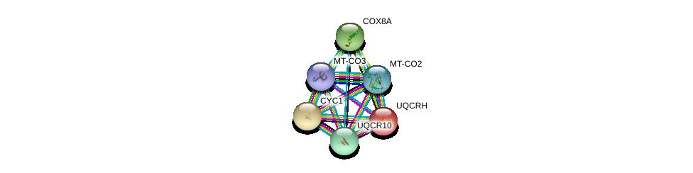 http://string-db.org/version_10/api/image/networkList?limit=0&targetmode=proteins&caller_identity=gene_cards&network_flavor=evidence&identifiers=9606.ENSP00000321260%0d%0a9606.ENSP00000354982%0d%0a9606.ENSP00000354876%0d%0a9606.ENSP00000332887%0d%0a9606.ENSP00000317159%0d%0a9606.ENSP00000309565%0d%0a