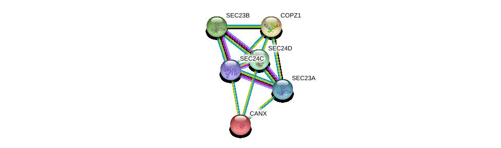http://string-db.org/version_10/api/image/networkList?limit=0&targetmode=proteins&caller_identity=gene_cards&network_flavor=evidence&identifiers=9606.ENSP00000321845%0d%0a9606.ENSP00000306881%0d%0a9606.ENSP00000280551%0d%0a9606.ENSP00000262544%0d%0a9606.ENSP00000262061%0d%0a9606.ENSP00000247461%0d%0a