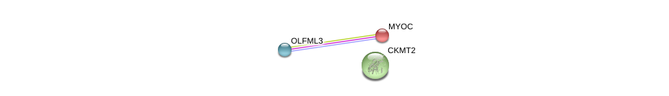 http://string-db.org/version_10/api/image/networkList?limit=0&targetmode=proteins&caller_identity=gene_cards&network_flavor=evidence&identifiers=9606.ENSP00000322273%0d%0a9606.ENSP00000037502%0d%0a9606.ENSP00000254035%0d%0a