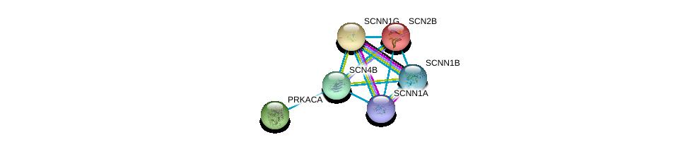 http://string-db.org/version_10/api/image/networkList?limit=0&targetmode=proteins&caller_identity=gene_cards&network_flavor=evidence&identifiers=9606.ENSP00000322460%0d%0a9606.ENSP00000300061%0d%0a9606.ENSP00000345751%0d%0a9606.ENSP00000353292%0d%0a9606.ENSP00000278947%0d%0a9606.ENSP00000309591%0d%0a