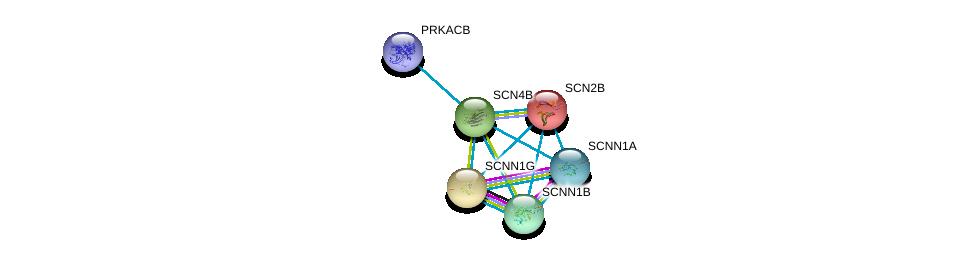 http://string-db.org/version_10/api/image/networkList?limit=0&targetmode=proteins&caller_identity=gene_cards&network_flavor=evidence&identifiers=9606.ENSP00000322460%0d%0a9606.ENSP00000345751%0d%0a9606.ENSP00000353292%0d%0a9606.ENSP00000278947%0d%0a9606.ENSP00000300061%0d%0a9606.ENSP00000359719%0d%0a