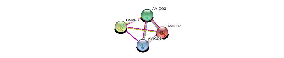 http://string-db.org/version_10/api/image/networkList?limit=0&targetmode=proteins&caller_identity=gene_cards&network_flavor=evidence&identifiers=9606.ENSP00000323096%0d%0a9606.ENSP00000266581%0d%0a9606.ENSP00000309092%0d%0a9606.ENSP00000358878%0d%0a