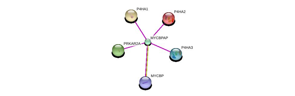 http://string-db.org/version_10/api/image/networkList?limit=0&targetmode=proteins&caller_identity=gene_cards&network_flavor=evidence&identifiers=9606.ENSP00000323184%0d%0a9606.ENSP00000380702%0d%0a9606.ENSP00000263556%0d%0a9606.ENSP00000166534%0d%0a9606.ENSP00000332170%0d%0a9606.ENSP00000265563%0d%0a