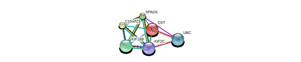http://string-db.org/version_10/api/image/networkList?limit=0&targetmode=proteins&caller_identity=gene_cards&network_flavor=evidence&identifiers=9606.ENSP00000323300%0d%0a9606.ENSP00000244364%0d%0a9606.ENSP00000249776%0d%0a9606.ENSP00000361298%0d%0a9606.ENSP00000344818%0d%0a9606.ENSP00000341466%0d%0a