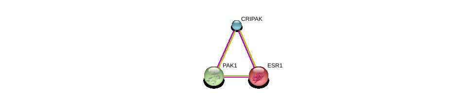 http://string-db.org/version_10/api/image/networkList?limit=0&targetmode=proteins&caller_identity=gene_cards&network_flavor=evidence&identifiers=9606.ENSP00000323978%0d%0a9606.ENSP00000206249%0d%0a9606.ENSP00000278568%0d%0a