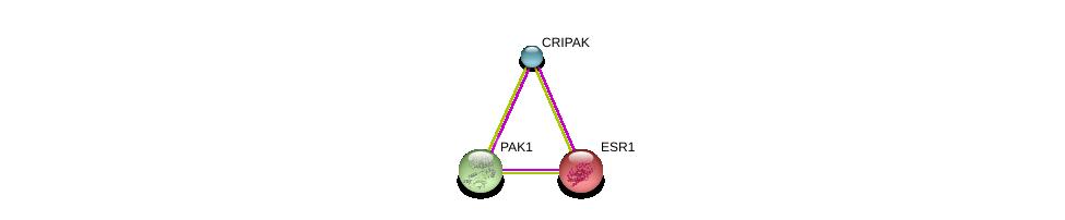 http://string-db.org/version_10/api/image/networkList?limit=0&targetmode=proteins&caller_identity=gene_cards&network_flavor=evidence&identifiers=9606.ENSP00000323978%0d%0a9606.ENSP00000278568%0d%0a9606.ENSP00000206249%0d%0a