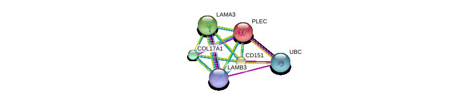 http://string-db.org/version_10/api/image/networkList?limit=0&targetmode=proteins&caller_identity=gene_cards&network_flavor=evidence&identifiers=9606.ENSP00000324101%0d%0a9606.ENSP00000344818%0d%0a9606.ENSP00000348384%0d%0a9606.ENSP00000340937%0d%0a9606.ENSP00000324532%0d%0a9606.ENSP00000323856%0d%0a